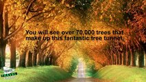 10 Most Amazing Tree Tunnels in the World (2)