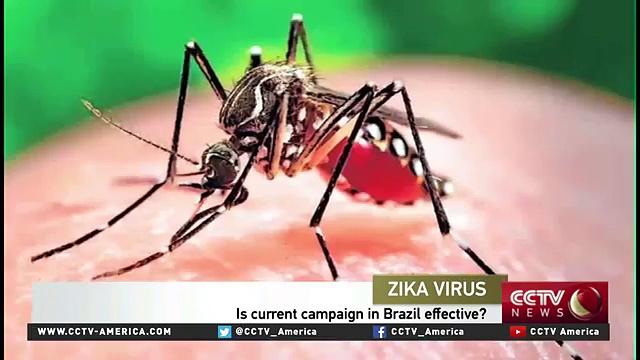 The World Health Organization declares Zika virus a global emergency (FULL HD)