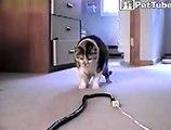 Cat vs Snake fighting very funny ....Cute Cat doing funny things .. Cat vs snake Funny Video ..