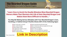 The Bearded Dragon Guide Review - How To Care Bearded Dragon