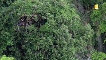 MODULE FIFO 2016 sur Polynésie 1ère n°11_Environnement