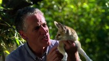 BBC Documentary 2015 BBC Super Cute Animals Animals Planet, Discovery Channel