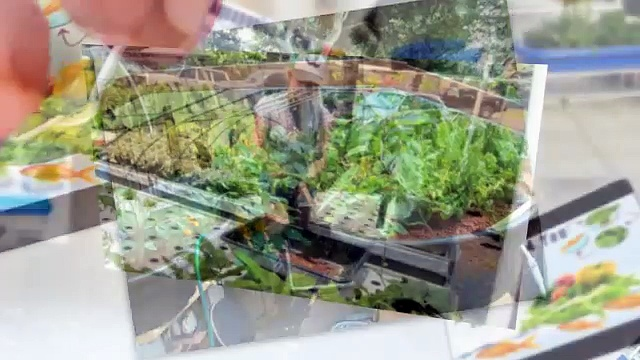 How To Buy Aquaponics 4 You Review – Does It Really Work?
