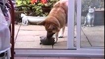 Des animaux serviables et très utiles - Compilation de chiens et chats