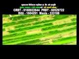Rudai Kyari Bacham | Shambhu Kunwar & Tika Pun | Shuvaramva Digital