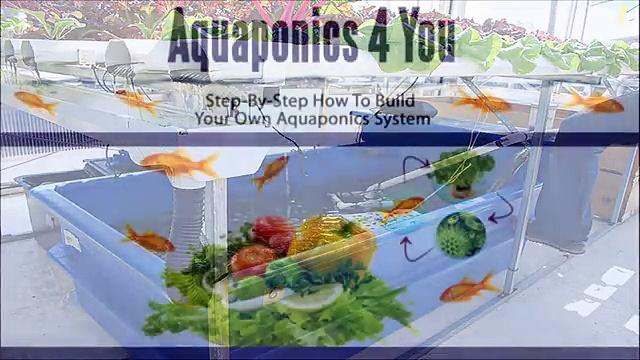 "[AQUAPONICS SYSTEM DESIGN GROWING POWER]  ""AQUAPONICS 4 YOU""  HOW DOES IT WORK !!"