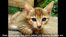 Does Cat Spraying No More Work | Be Surprised | Does Cat Spraying No More Really Work