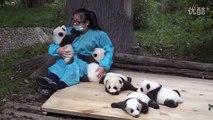 Vidéo : Les Pandas ont besoin de câlins