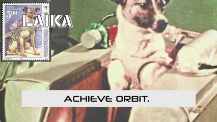 10 Animals Who Went To Space