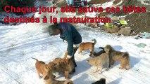 Elle accueille plus de 200 chiens chez elle pour ne pas qu'ils soient mangés
