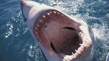 Great White Shark Attacks Caught On Tape Sharks Attack [Nature Wildlife Documentary Full H