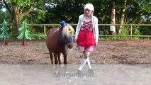 """Clickertraining/Tricks mit Pferden Vorführungen 2. Teil aus """"Die Reise zur weissen Taube"""" 2015"""