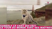 Gandalf, le chat qui fait le tour du monde avec ses maîtres ! On en parle dans la minute chat #121