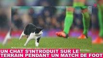 Un chat s'introduit sur le terrain pendant un match de foot ! Le moment insolite dans la minute chat #123