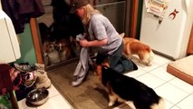 Des chiens attendent de se faire essuyer les pattes