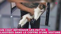 Un chat retrouvé les pattes ligotées dans le coffre d'un voiture... Une triste découverte dans la minute chat #124