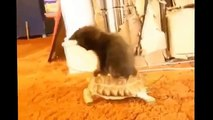 Best Funny Cats Fails Compilation  Funny Cat Videos 2015 - Funny Pets, Funny Animals -