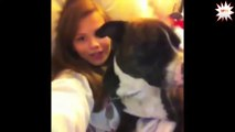 Dog whisperer 2015 - puppy dog whisperer funny