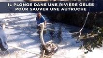 Il plonge dans une rivière gelée pour sauver une autruche