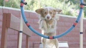 Lucky Dog - Jumping Through Hoops
