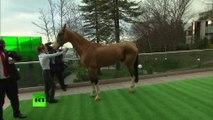Un cadeau à quatre pattes : Poutine offre un cheval turkmène au roi du Bahreïn