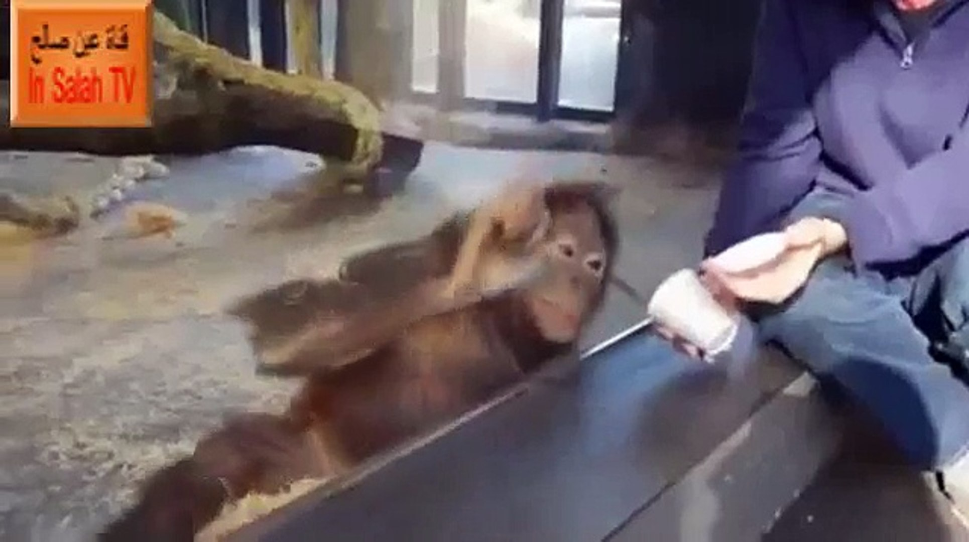 Funny Monkey Cute Laughing (Video)