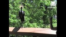 Mean bird pecks unsuspecting woman