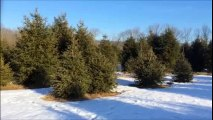 Do You Need Evergreen Trees or Shrubs