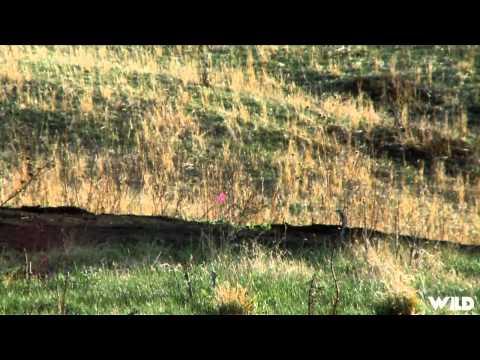 Easton Bowhunting TV – Colorado Turkeys