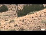 MOJOs Migration - Colorado Coyotes