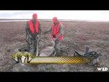 Christensen Outdoors - Barren Ground Caribou in Northern Manitoba