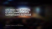 Les insectes fossiles et les changements climatiques du passé (Changements climatiques et biodiversité 1/5)