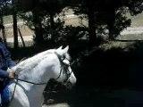 29 mai ballade cheval