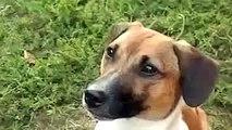 ПЕС СКАЗАЛ МАМА !!! ПРИКОЛ ! Ultimate Funny Dog Videos Compilation 2014 [NEW]