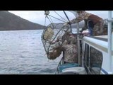 MOJOs Coming to the Call - The Kodiak Challenge Part 2