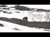 Steves Outdoor Adventures - Alaskan Grizzly Bear Hunt