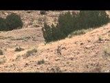 MOJOs Coming to the Call - Calling Colorado Coyotes with BTO