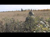 MOJOs Coming to the Call - Ranchland Coyote