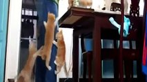 Les Meilleurs moments drôles avec les chats (Best Funny Moments with Cats)