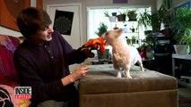 Une compilation montre les effets du cannabis sur les chiens