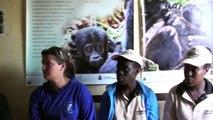 Mountain Gorilla Trekking Briefing - Bwindi Impenetrable National Park