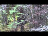 Feel the Rush TV - Saskatchewan Black Bear Hunt