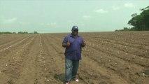 Gabon, Graine dans le Haut Ogooué