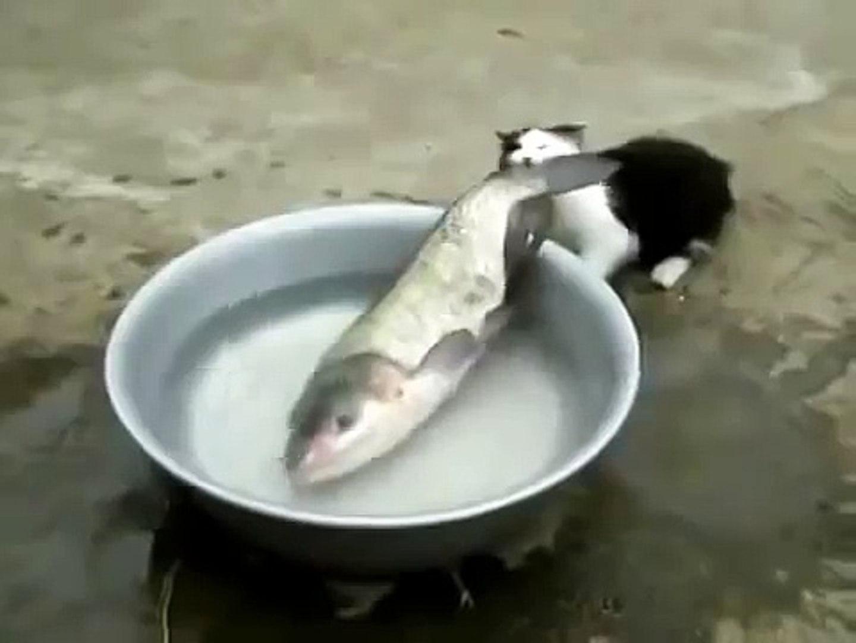 ЩАС Я ТЕБЯ СЪЕМ! ПРИКОЛ С КОТОМ!!! Котэ хочет рыбку! Улетное видео!