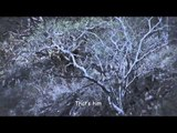 Headhunter Chronicles - Mexico Desert Sheep