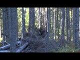 Excalibur's Huntin' the Backwoods - Ignace Outposts