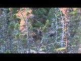 Excalibur's Huntin' the Backwoods - Newfoundland Adventure