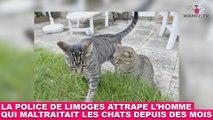 La police de Limoges attrape l'homme qui maltraitait les chats depuis des mois ! L'histoire dans la minute chat #128