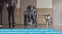 """Un spot vidéo pour lutter contre la discrimination des chiens dits """"dangereux"""" ! À découvrir dans la minute chien #128"""