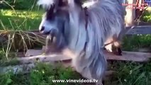 Greatest animal VINE compilation of cats and dog november 2013! Vines